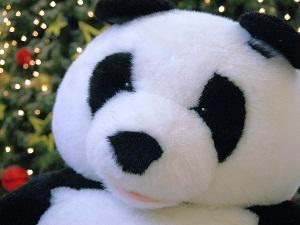 Post Panda Planet